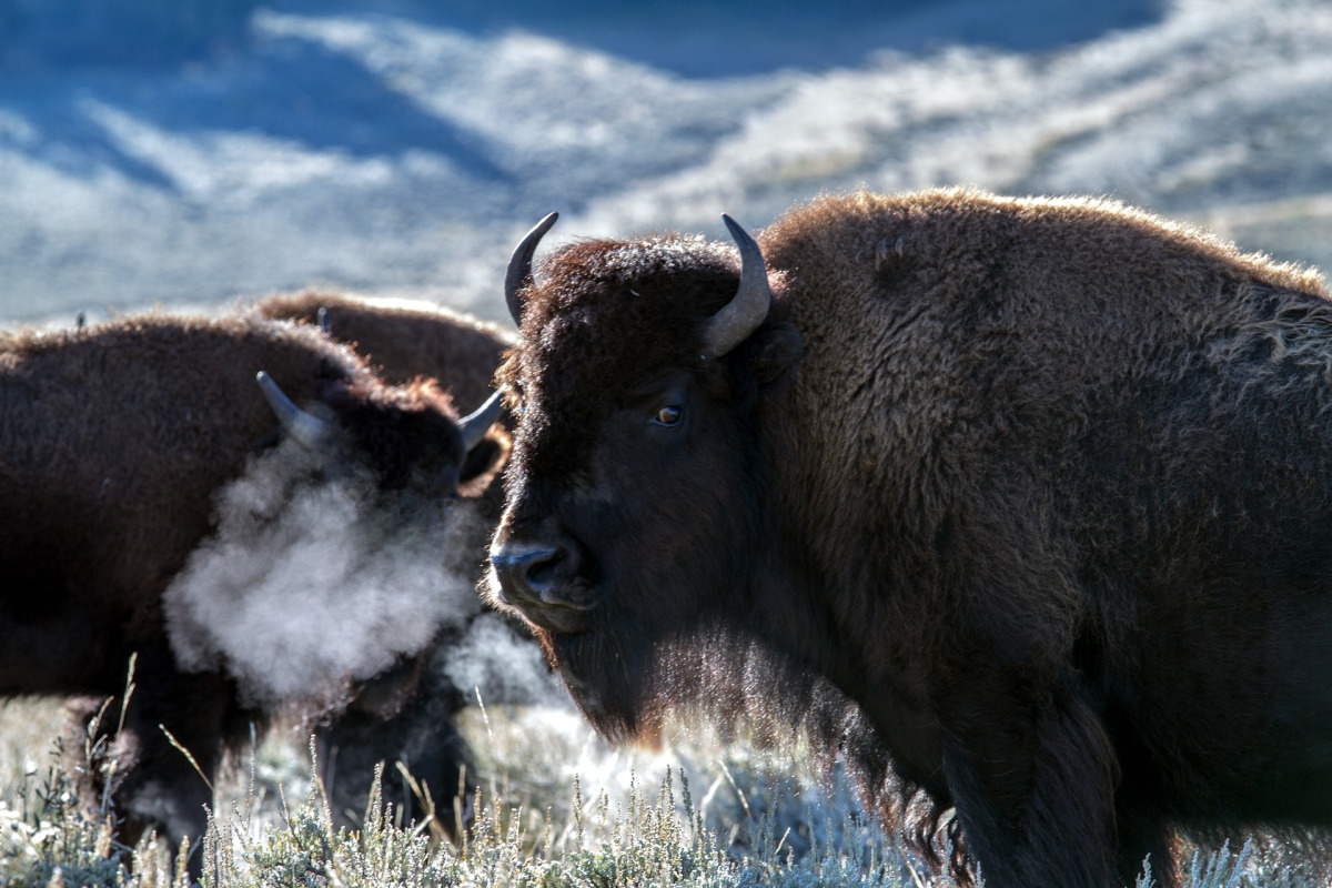 Should Yellowstone Have 484 New Cell Towers? Comments due Nov 29, 2019, Smombie Gate   5G   EMF
